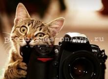 Заработок на фотографиях в Интернет.